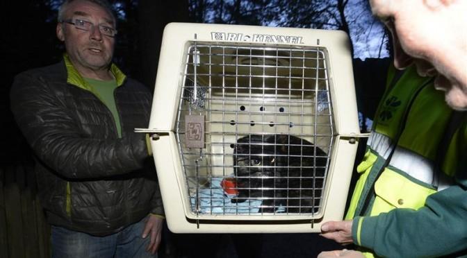 kat na een week uit boom gehaald door professionele boomklimmer