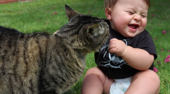 Kat en baby, kan dat samen?